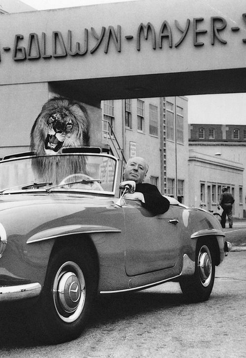 "Alfred Hitchcock poses in his Mercedes-Benz 190 SL convertible with an illusion of the MGM lion in the passenger seat. ""Hitch"" was on the studio lot to direct his only MGM film, the classic 1959 thriller ."
